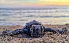 Volunteers rescued endangered turtles affected by winter storm Uri.